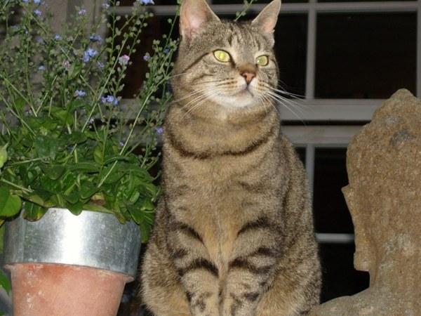 Vincenzo (znaleziony przez przyjaciół w Italii i zaadoptowany) strzeże posągu Buddy...