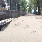 Molo w Sopocie ponownie otwarte. Plaża przeniosła się natomiast... do parku