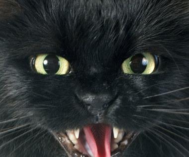Morderczy kot z Bydgoszczy