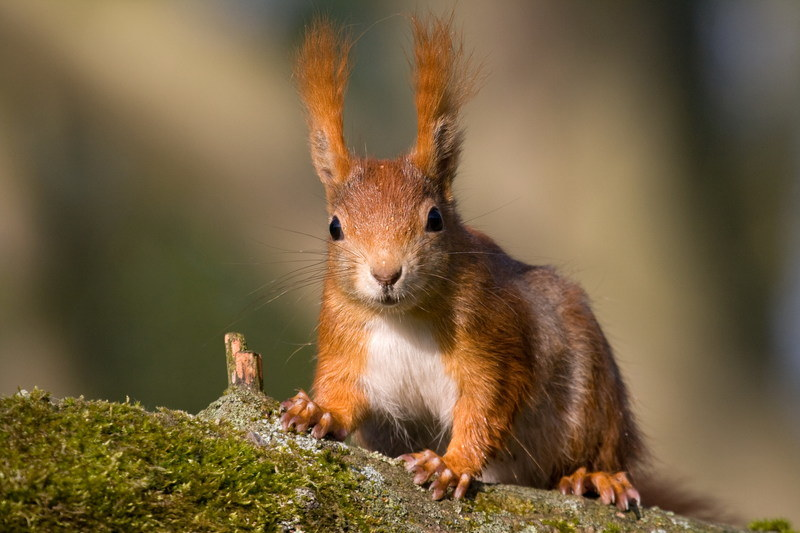 Moskiewskie wiewiórki nie znają dnia ani godziny... /© Panthermedia