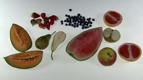 Możesz je jeść do woli! 10 owoców, które zawierają najwięcej wody