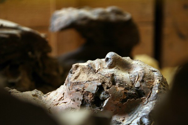 Archeolodzy badają mumie wydobyte z egipskich piramid w Kairze
