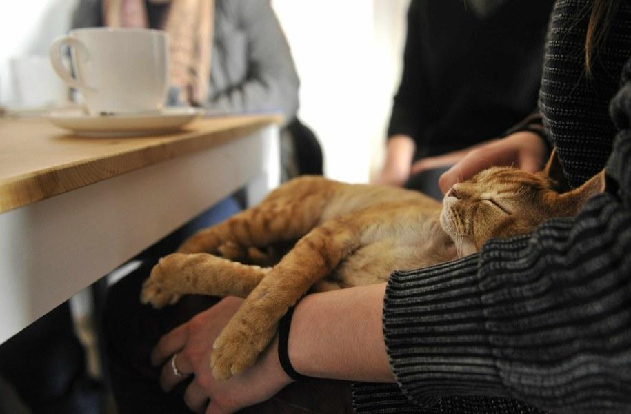 Muzyka, którą lubią koty (zdj. ilustracyjne) / Ziga Zivulovic jr./FA Bobo/PIXSE    /PAP/EPA