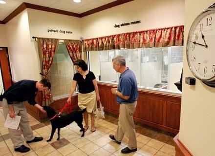 Na godzinkę, czy na cały dzień? Petsitting w amerykańskim wydaniu. /AFP