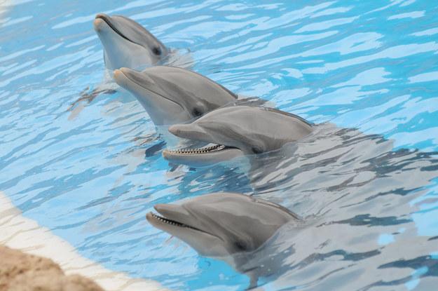 Na Kanarach można także odwiedzić delfinarium /123/RF PICSEL