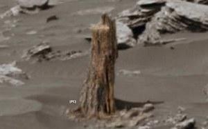 Na Marsie odkryto coś, co wygląda na skamieniały pień drzewa