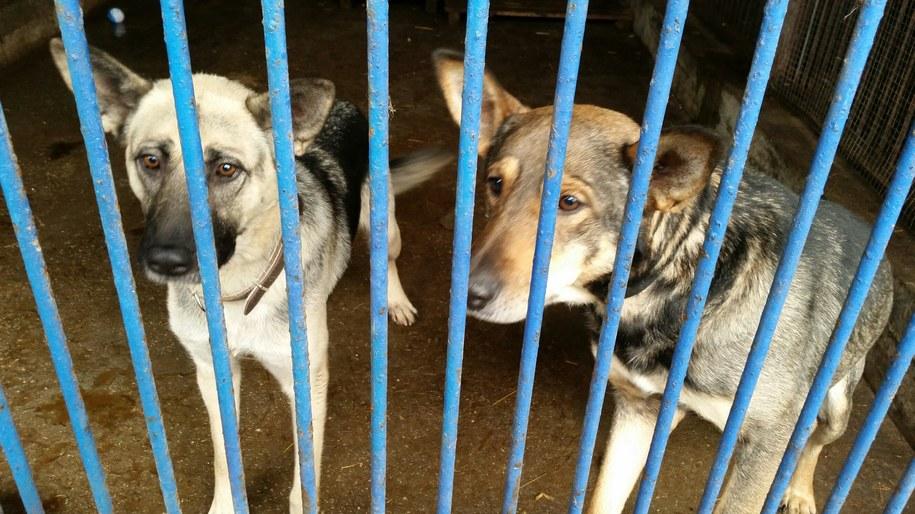Na pomoc czeka ponad setka psiaków ze schroniska w Dyminach /Ewa Kwaśny /RMF FM