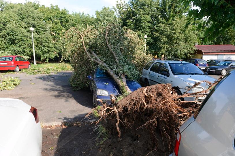 Na poznańskim osiedlu Winiary przy ulicy generała Maczka kilka drzew przewróciło się na zaparkowane tam samochody, podczas gwałtownej nawałnicy, która przeszła popołudniu /Jakub Kaczmarczyk /PAP