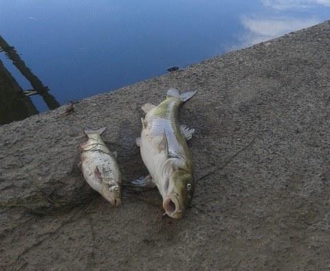 Na razie nie wiadomo, co zabiło ryby /Bartłomiej Paulus /RMF FM