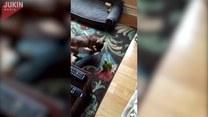 Nachalny pies zdenerwował ptaka