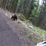 Nagle na ich drodze pojawił się niedźwiedź! Tę przejażdżkę zapamiętają na zawsze!