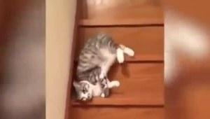 Najbardziej leniwy kot?