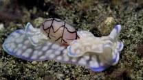 Najdziwniejszy ślimak na świecie. Internet oszalał