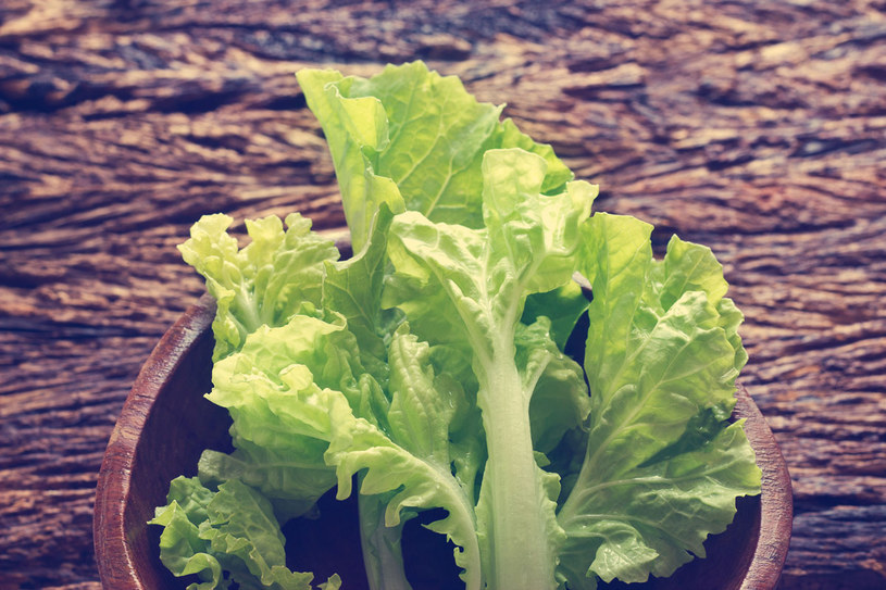 Najlepiej, by sałata pochodziła z własnego ogrodu lub z upraw ekologicznych. /123RF/PICSEL
