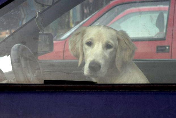 Najlepiej samochodu przypilnuje pies / kliknij /INTERIA.PL