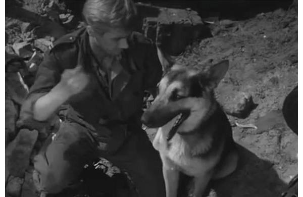 """""""Czterej pancerni i pies"""": Oczywiście nie mogło zabraknąć w naszym zestawieniu jednego z najsłynniejszych polskich psów – Szarika. W serialu jego rolę odgrywały trzy psy – """"Trymer"""" oraz """"Atak"""" i """"Spik"""". Pies Janka Kosa nieraz wybawił załogę czołgu z opresji."""