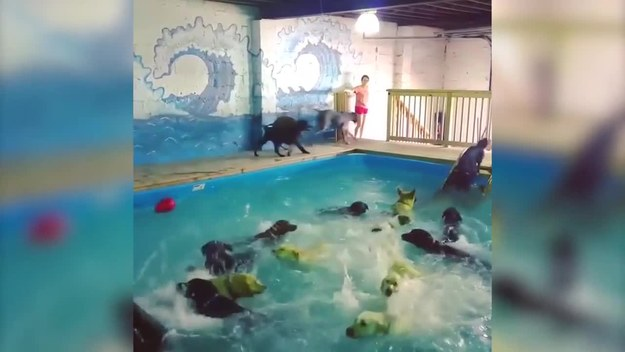 Najradośniejsza impreza na basenie