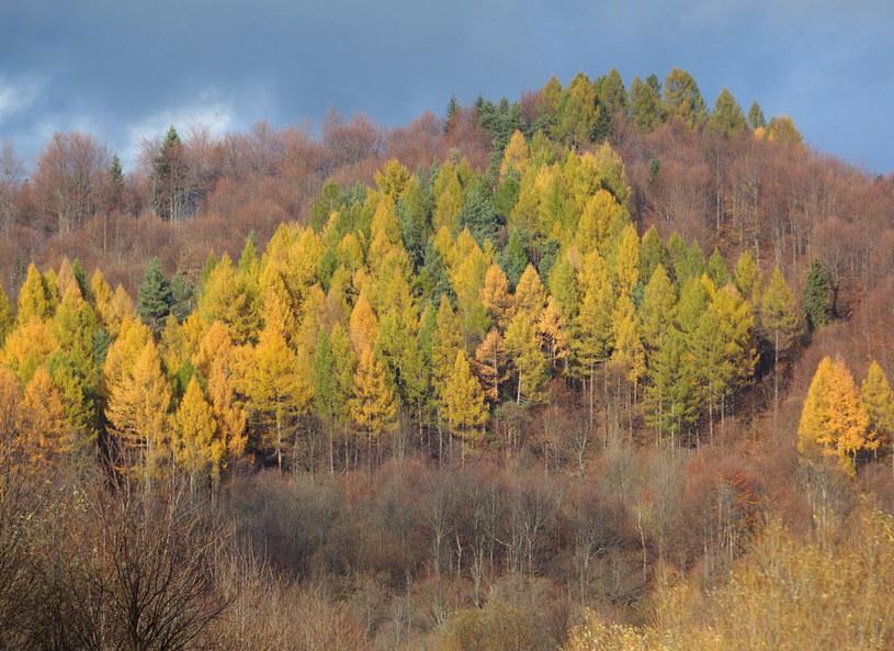 Najrzadziej zaludnione polskie góry są rajem dla miłośników przyrody /East News /East News