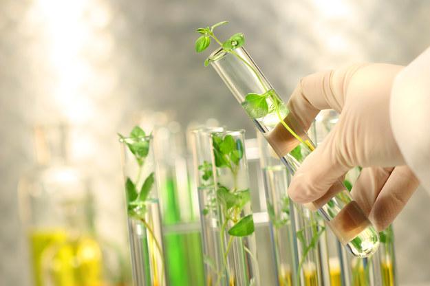 Narodowe Centrum Nauki przeznaczyło 700 mln zł na projekty badawcze / Glowimages /&nbsp