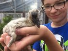 Nastolatek zaopiekował się porzuconym bocianem. Pomóż znaleźć imię dla uroczego ptaszka!
