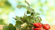 Natura dla zdrowia: Dzika róża