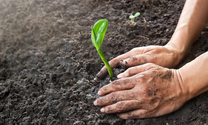 Naturalne zasoby, które powinny wystarczyć nam na cały rok zużyliśmy zaledwie w 8 miesięcy. /©123RF/PICSEL