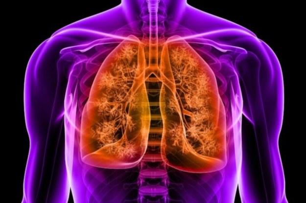 Naukowcom udało się przekształcić komórki macierzyste w funkcjonalny nabłonek płuc /123RF/PICSEL