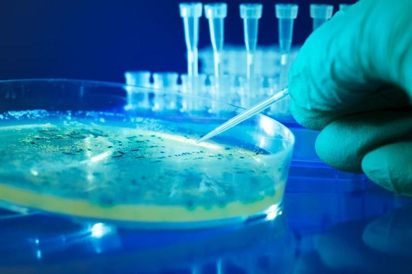 Naukowcy już wiedzą, w jaki sposób bakterie odbierają światło /123RF/PICSEL
