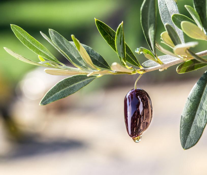 Naukowcy odkryli, dlaczego oliwa z oliwek jest tak skuteczna w zapobieganiu miażdżycy /©123RF/PICSEL