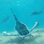 """Naukowcy odkrywają tajemnice """"skorpionów morskich"""""""