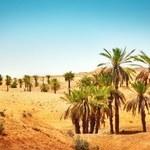 Naukowcy wyhodowali rośliny na pustyni