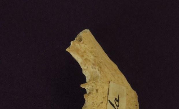Naukowcy zbadali szczątki św. Mikołaja