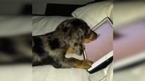 Nawet pies może uzależnić się od gier