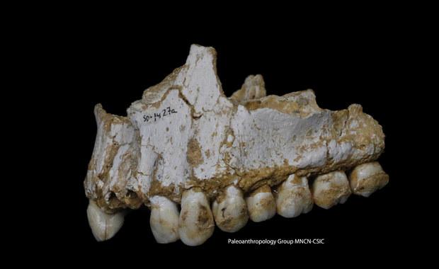 Neandertalczycy zażywali... antybiotyki i aspirynę!