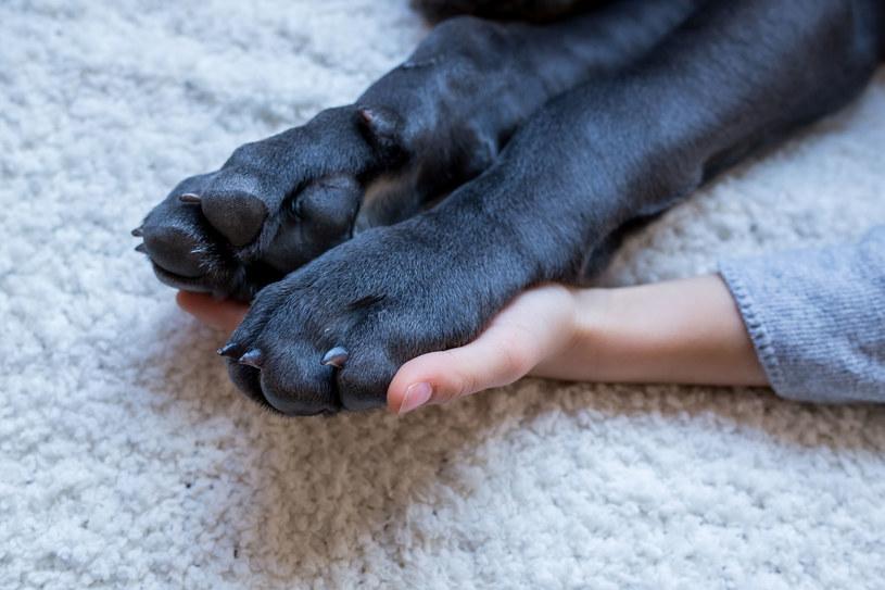 Nie jest zabawne ciągnięcie kota za ogon ani szarpanie psa za uszy /©123RF/PICSEL