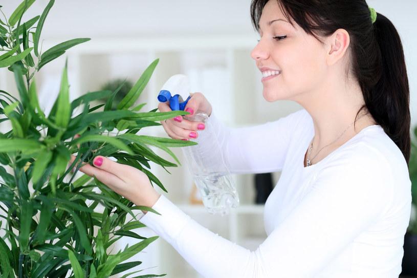 Nie wszystkie rośliny lubią skrapianie liści wodą /123RF/PICSEL