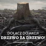 """""""Nie wycinaj. Musisz? Posadź nowe"""". Kraków walczy o """"Drzewo za drzewo"""""""