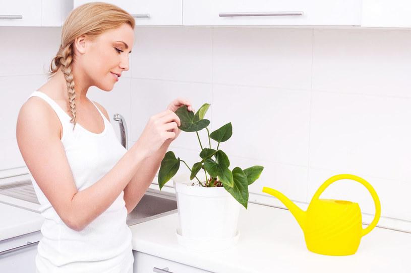 Nie zapominajmy o zagrożeniach czyhających w kuchni na nasze kwiaty, ale także nigdy nie rezygnujmy z ozdabiania jej kwiatami /123RF/PICSEL