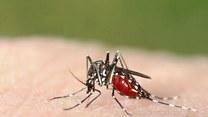Niebezpieczne komary. O której porze dnia są najgroźniejsze?