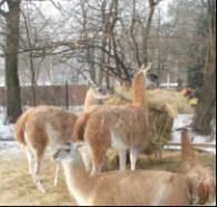 Niedługo zwierzęta z wrocławskiego zoo będzie można zobaczyć na płycie CD /RMF