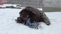 Niedźwiedź bardzo chciał się przytulić