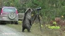 Niedźwiedź, który został fotografem