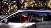Niedźwiedź utknął w samochodzie! Pomogła policja