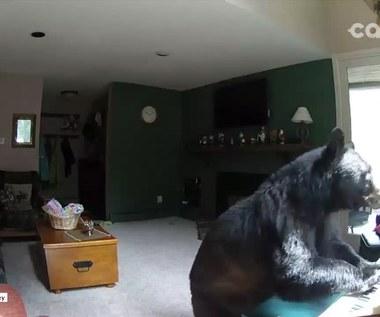 Niedźwiedź włamał się do domu i...