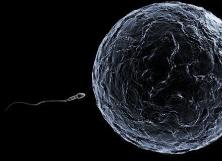 Niektóre zaburzenia składu chromosomów komórki jajowej nie mają związku z wiekiem kobiety /© Panthermedia