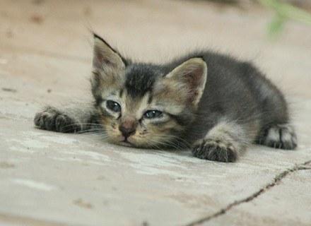 Niektórzy alergicy są gotowi zapłacić za kota fortunę