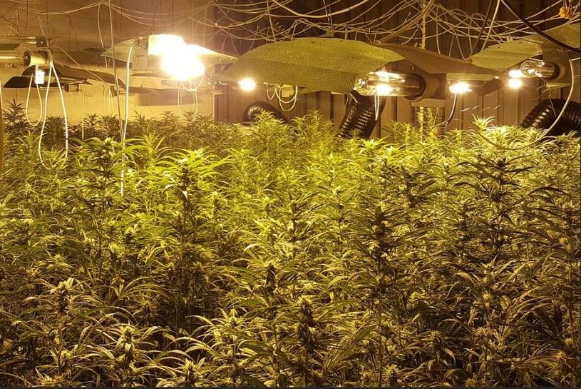 Nielegalna plantacja /Policja