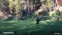 Nieproszeni goście na polu golfowym
