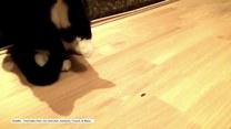 Nierówna walka kota ze stonogą