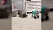 Niesamowita reakcja psa na zabawę z dzieckiem